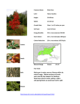 Leaves Seeds Natural Range Zones: 4 to 9 Fun Facts: Bark Black