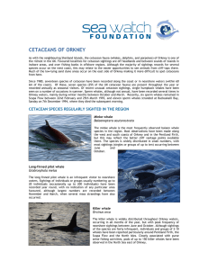cetaceans of orkney - Sea Watch Foundation