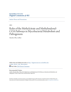 Roles of the Methylcitrate and Methylmalonyl