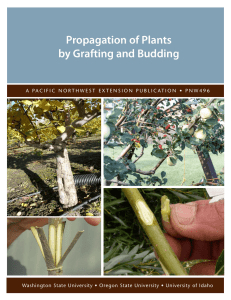 Propagation of Plants by Grafting and Budding