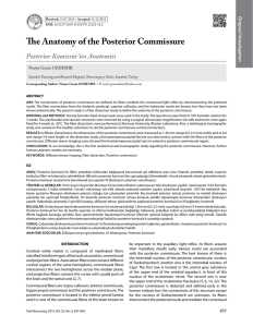 The Anatomy of the Posterior Commissure