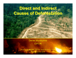 Direct and Indirect Causes of Deforestation