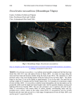 Oreochromis mossambicus (Mozambique Tilapia)