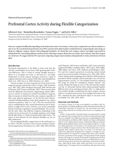 Prefrontal Cortex Activity during Flexible Categorization