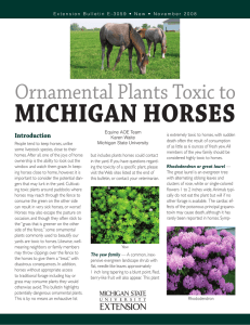 Ornamental Plants Toxic to Michigan Horses