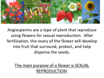 The main purpose of a flower is SEXUAL REPRODUCTION