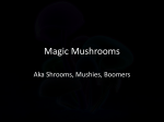 Magic mushrooms (L)