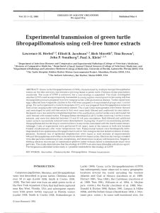 Experimental transmission of green turtle fibropapillomatosis using