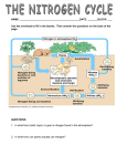 Worksheet Nitrogen Cycle