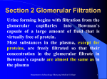Section 2 Glomerular Filtration