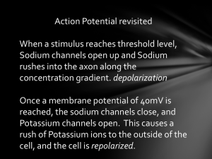 Action Potential revisited When a stimulus reaches threshold level
