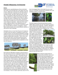 Florida`s Mangroves: An Overview - Miami