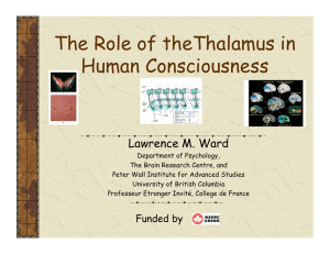 The Role of theThalamus in Human Consciousness