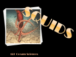 SQUID ocean Sciences 122 - deb-or-ah