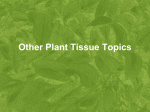 Other Tissue Culture Topics