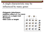 A single characteristic may be influenced by many genes