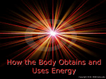 How the Body Obtains and Uses Energy PPT