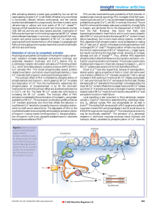 Modulation of calcium by sympathetic activation