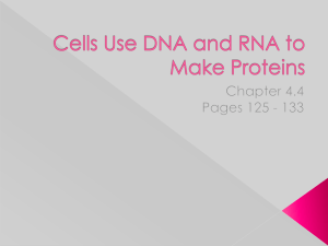 Cells Use DNA and RNA to Make Proteins