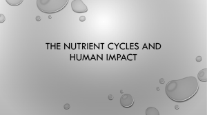 The Nutrient Cycles and Human Impact