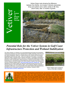 Potential Role for the Vetiver System in Gulf Coast