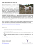 Equine Infectious Anemia (EIA): Coggins Test