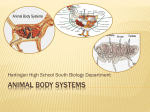 Animal body systems