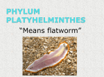 ch.14 platyhelminthes notes powerpoint