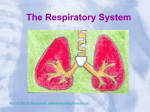 Respiratory_System (1) - Blountstown Middle School