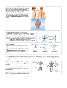 Central Nervous System (CNS): the body`s main control center and