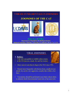 zoonoses of the cat