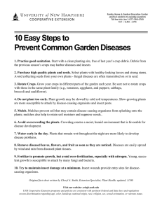 10 Easy Steps to Prevent Common Garden Diseases