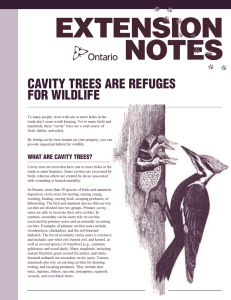 cavity trees are refuges for wildlife