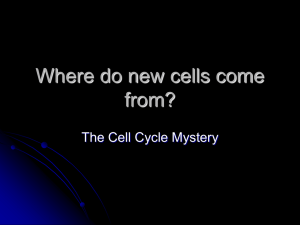Where do new cells come from?