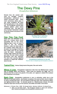Dewy Pine Mini Poster - New England Carnivorous Plant Society