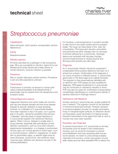 Streptococcus pneumoniae Technical Sheet | Charles River