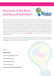 Structure of the Brain and Neurotransmitters