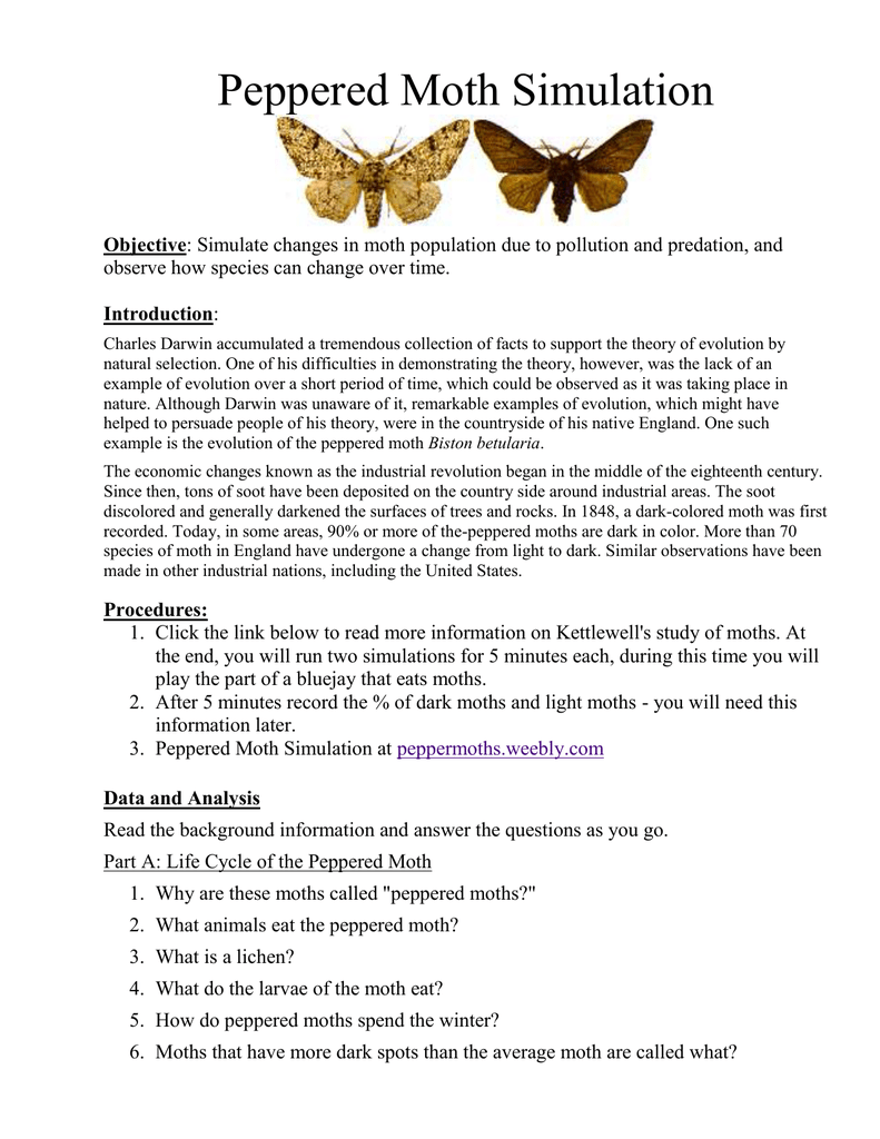 Life Cycle of the Peppered Moth – Peppered Moth Worksheet