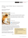 Diffuse Lower Motor Neuron Dysfunction in Dogs