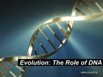 Evolution - The Role of DNA