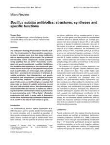 Bacillus subtilis antibiotics: structures, syntheses and specific functions