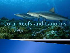 Coral Reefs and Lagoons