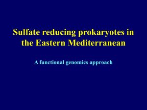 Sulfate reducing prokaryotes in Eastern Mediterranean hypersaline