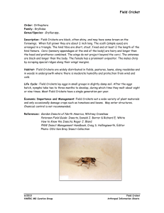 Field Cricket - OSU Extension Master Gardener Metro Area