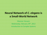 Neural Network of C. elegans is a Small