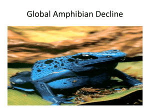 Global Amphibian Decline