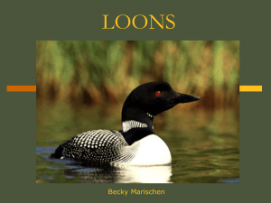 loons - People