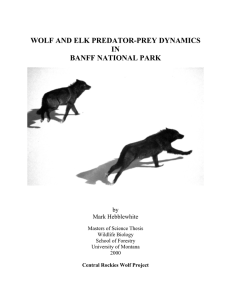 wolf and elk predator-prey dynamics in banff national park