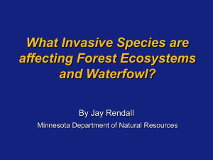 """Invasive"" Plants - MSU Department of Geography"