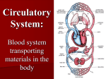 Circulatory System: Blood system transporting materials in the body